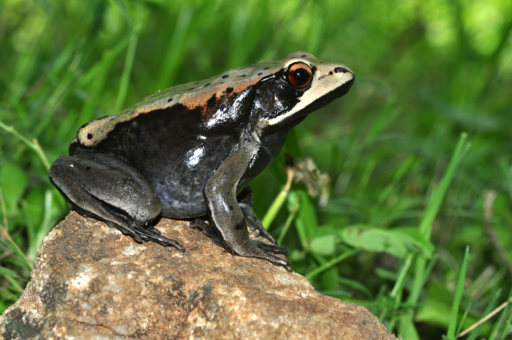 Frog Identification Workshop