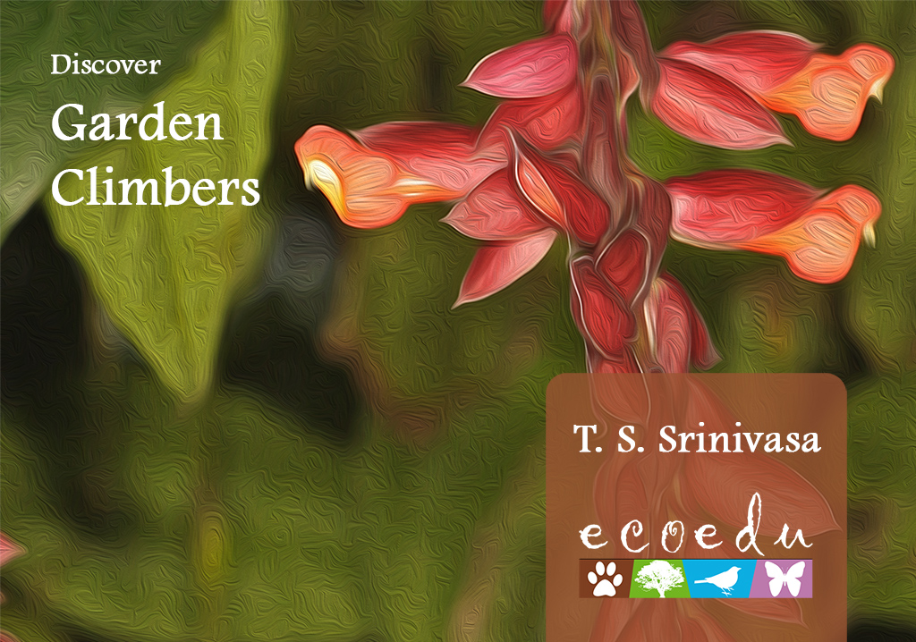 Discover Garden Climbers Inner Page