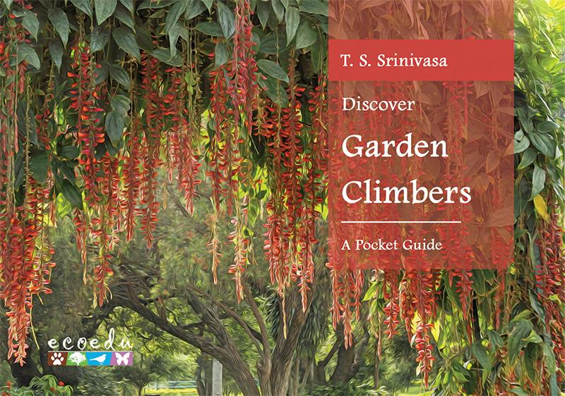 Discover Garden Climbers Cover Art